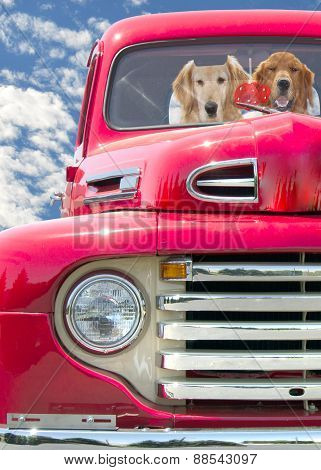 golden retrievers in red retro truck