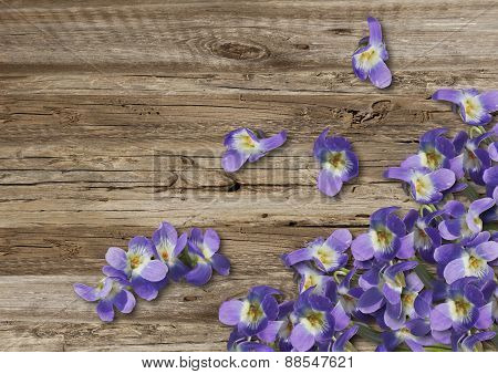 Violets On Old  Boarderes
