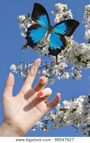Blue Butterfly On Hand