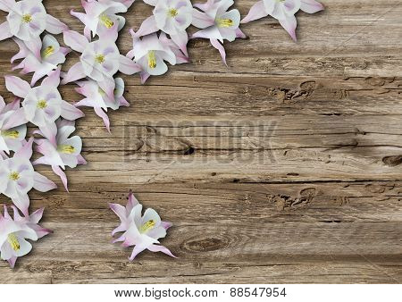 Flowers On Old  Boarderes