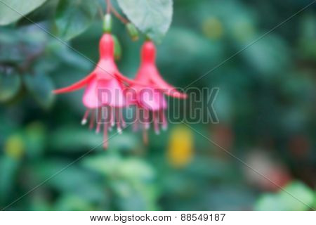 Blurry Defocused Lady's Eardrops Flower For Background