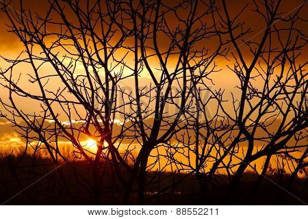 Bare Branches at Sunset