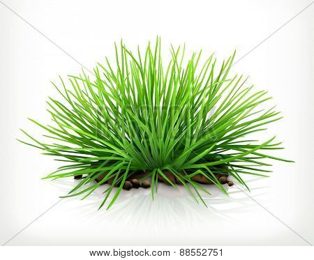 Fresh grass, vector icon