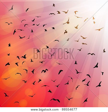 Birds, seagulls silhouette in the rays on pink background, sunset, dawn. Vector