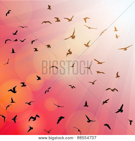 Birds, seagulls black silhouette on pink background, sunset, dawn. Vector