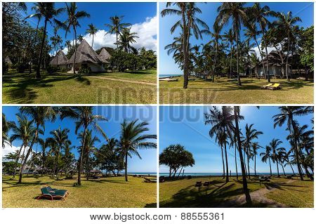 Palms on the beach in Mombasa