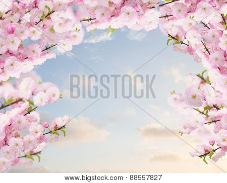 Blossoming white  tree Flowers