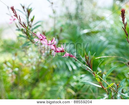 Twig With Pink Flowers At Green Meadow In Spring