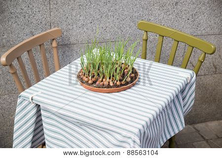 Onion Growing From A Container Located On A Restaurant Table.