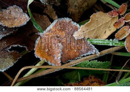 Autumn Leaves And Hoarfrost Pattern