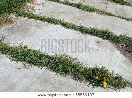 Grass And Dandelion Growing In Between Concrete