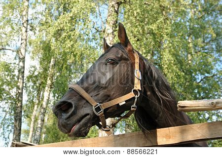 The Head Of A Black Horse Behind A Wooden Fence.