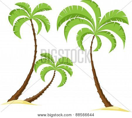 Palm Tree Isolated On White Background - Vector Illustration