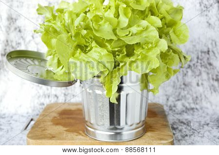Close Up Fresh Lettuce