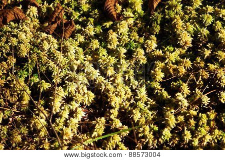 Green moss background at forest
