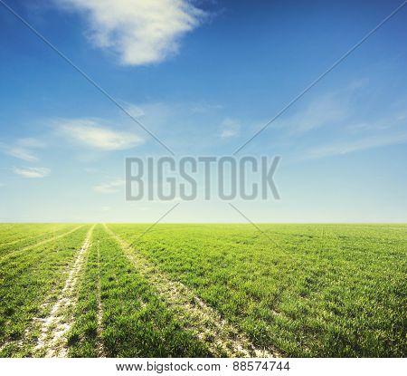 Beatiful morning field