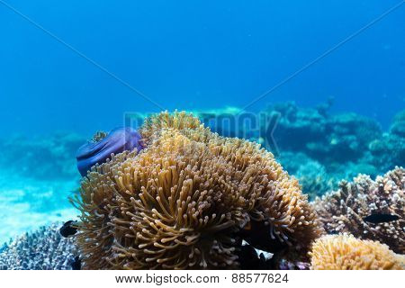 Beautiful colorful coral reef underwater at Maldives