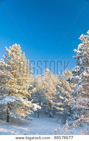 Cold Sunshine Wintry Landscape