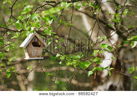Little Birdhouse in Spring birch leaves