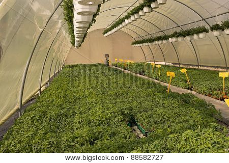 Various Flowers And Plants Inside Nursery - Hot House