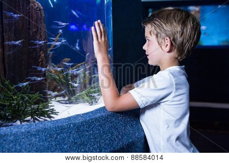 Happy young man looking at fish in tank at the aquarium
