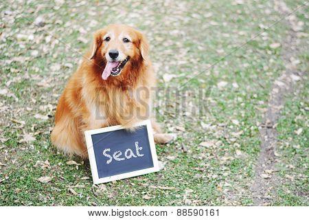 Labrador Dog And Blackboard Outdoors
