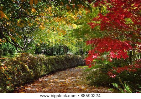Path In Autumn Filled With Dappled Light And Colour