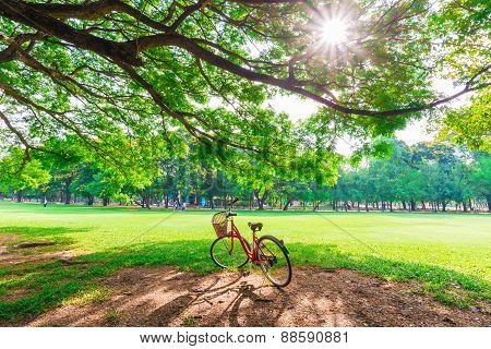 Red Bicycle On Green Grass