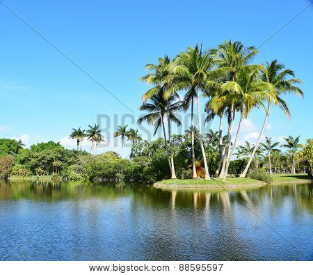 Tropical island with palm trees showing reflection