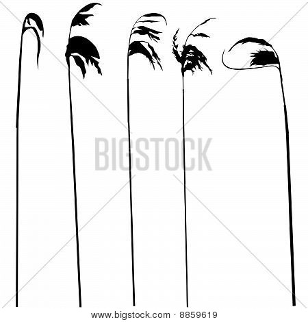 vector silhouette of the field herb on white background