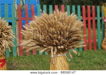 Sheaf of wheat on a background of rustic fence