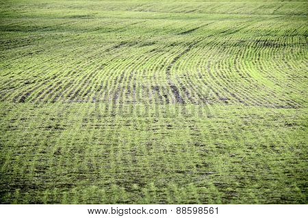 Arable Land After The Melting Snow