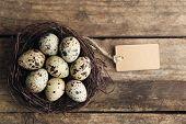 stock photo of bird egg  - Bird eggs in nest on wooden background - JPG