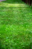 stock photo of hayfield  - green grass view with shallow depth of field