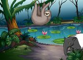 pic of rainforest animal  - Animals living by the pond in the forest - JPG