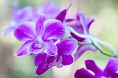 picture of orquidea  - Colorful orchids and ornamental plants in the garden.
