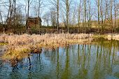 pic of wetland  - HDR shot of the natural wetland in pond - JPG