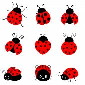 foto of ladybug  - Cute colorful ladybugs clipart collection isolated on white background - JPG