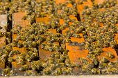 foto of bee-hive  - Colorful hives and bees in the nature - JPG