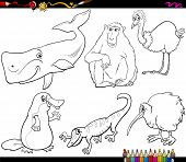 stock photo of platypus  - Coloring Book Cartoon Illustration Set of Funny Animals with their Favorite Food - JPG