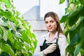 image of greenhouse  - Portrait of a young woman at work in greenhouse - JPG