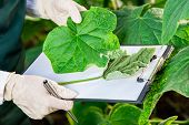 pic of genetic engineering  - Biotechnology woman engineer with a clipboard and pen examining plant leaf for disease - JPG