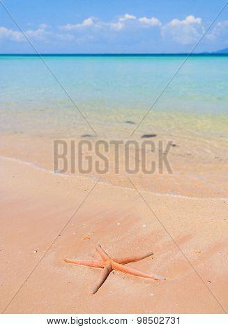 Sea Starlet Natural Details