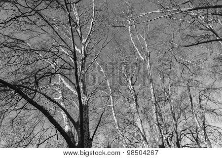 Trees Branches Winter