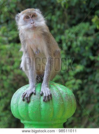 monkey is sitting on green sphere, Batu caves