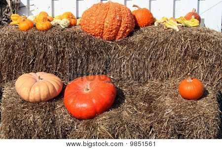 Pumpkins and Gourd on display with room for copy