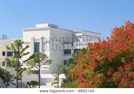 Hospital In The Fall