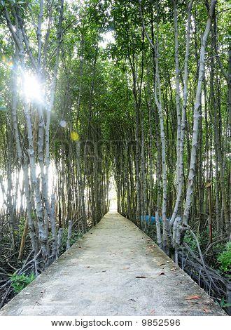 Footbridge In  Mangrove Forest Of Thailand