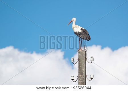 Big White Stork Against The Sky With Clouds