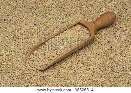 pearl barley in a wooden scoop